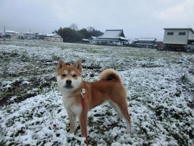 雪化粧ハナ