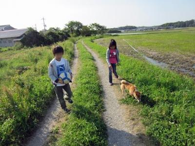 田んぼお散歩
