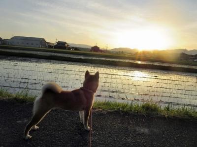 日の出ハナ