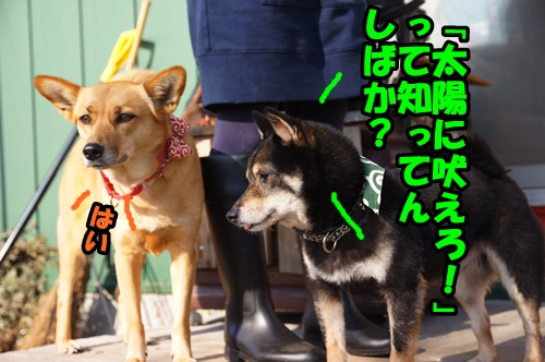 DSC00464-.jpg