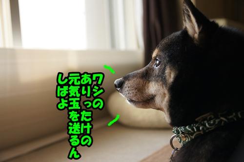 DSC00767_201503202104149e7.jpg
