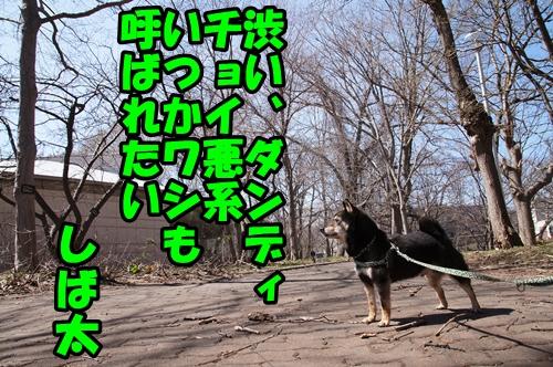 DSC01730_201504142100575c1.jpg