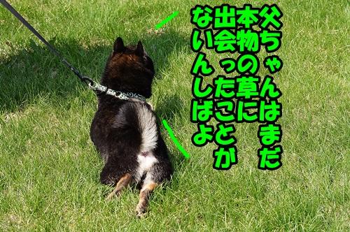 DSC02238_20150501160823d7d.jpg