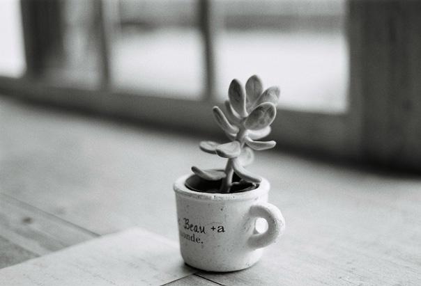 shio_kuju2cafe.jpg