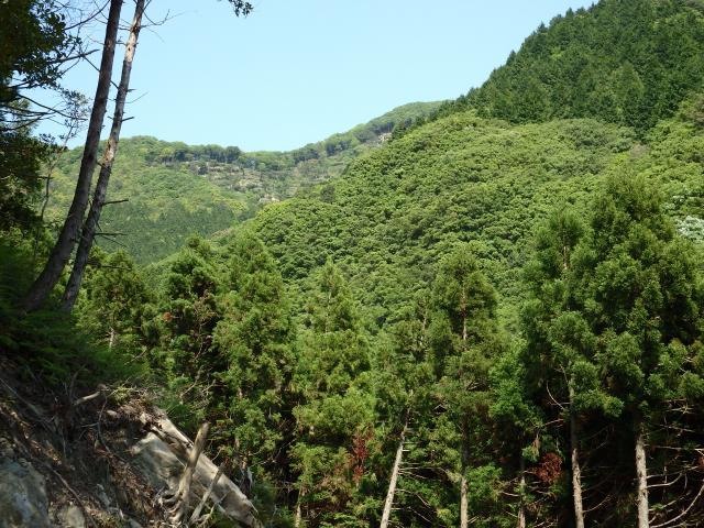植林用の林道を登る