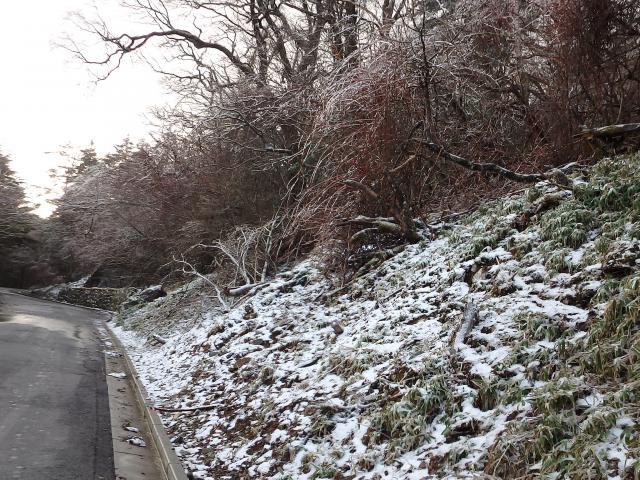 木の枝に雨氷が見られた