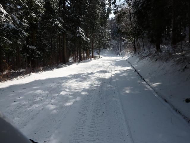 スギ植林帯に入ると地面は真っ白