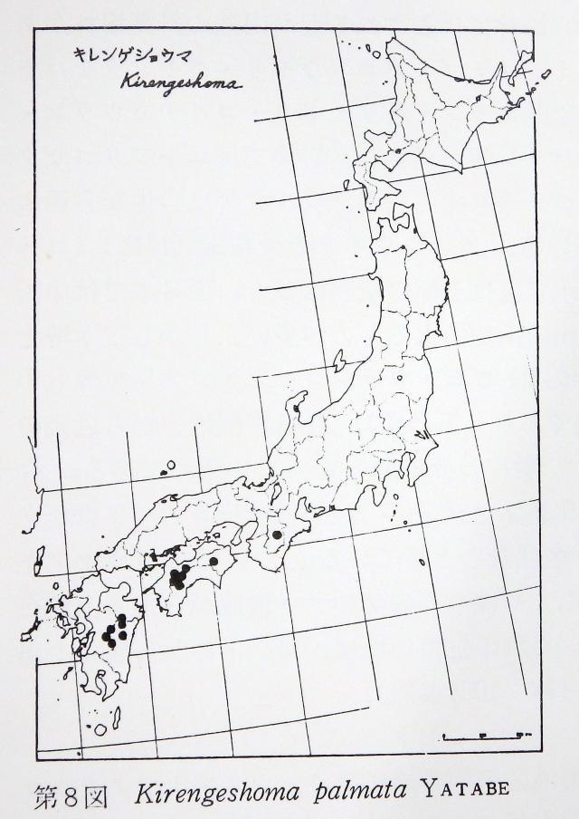 キレンゲショウマの分布図
