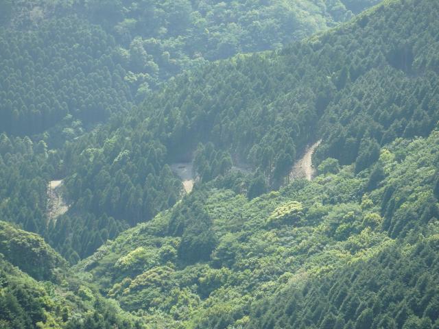 遥か下に林道が見える