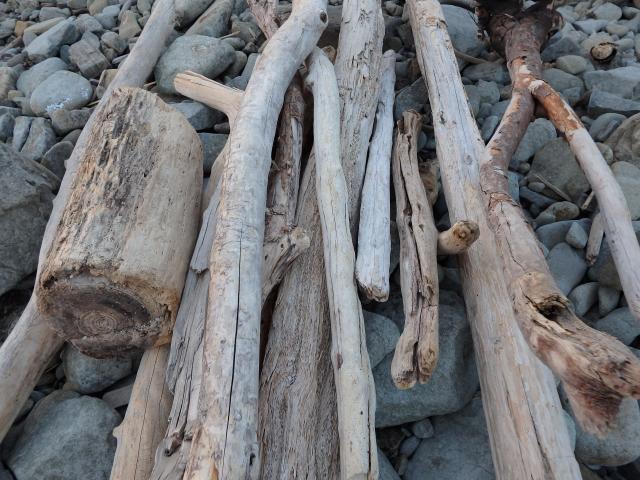 海岸は流木 (燃料) の宝庫