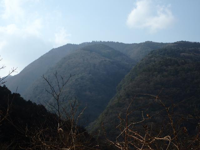 高越山の山頂を見上げる