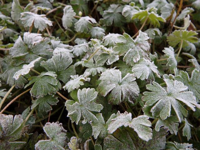 2014年12月28日 南あわじ市でも霜が降りた
