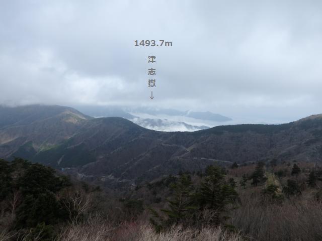 津志嶽への登山道は徳島県一のシャクナゲ尾根