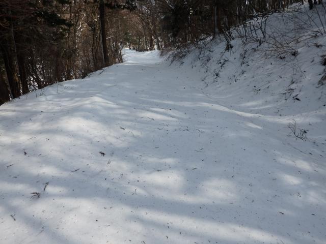 尾根の西側もスギ林中は積雪が多い