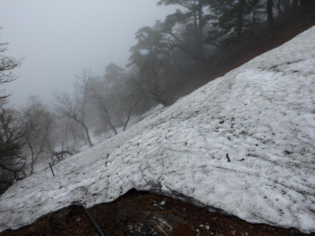 北東斜面に残る雪
