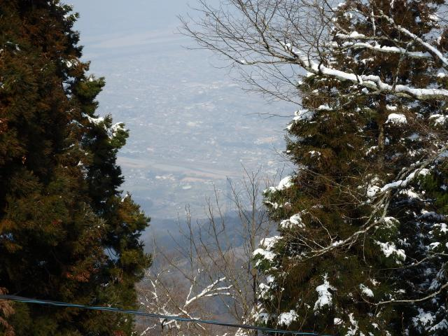 スギ林の間から山川町を俯瞰する