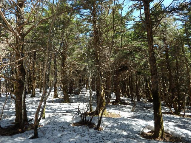 樹林の中は雪が少ない