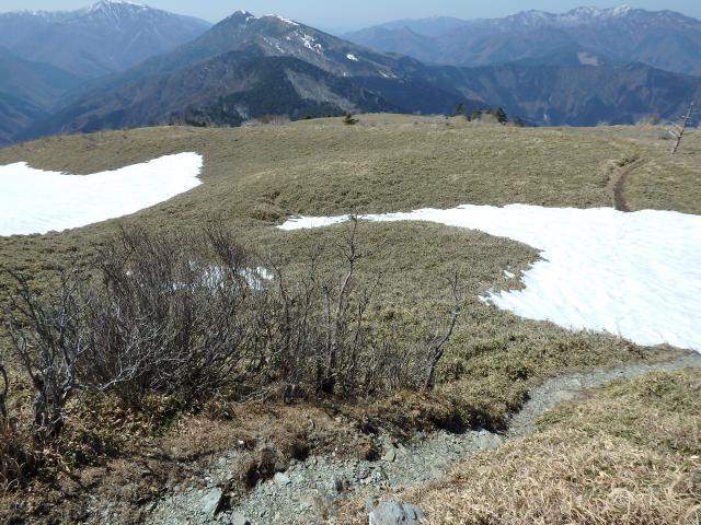山頂のササ原