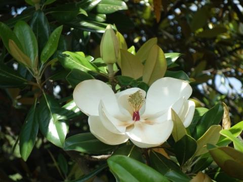 卯の花咲いて、菖蒲も咲いて