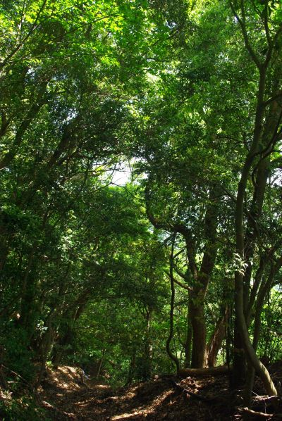150517-再度公園から六甲森林植物園2