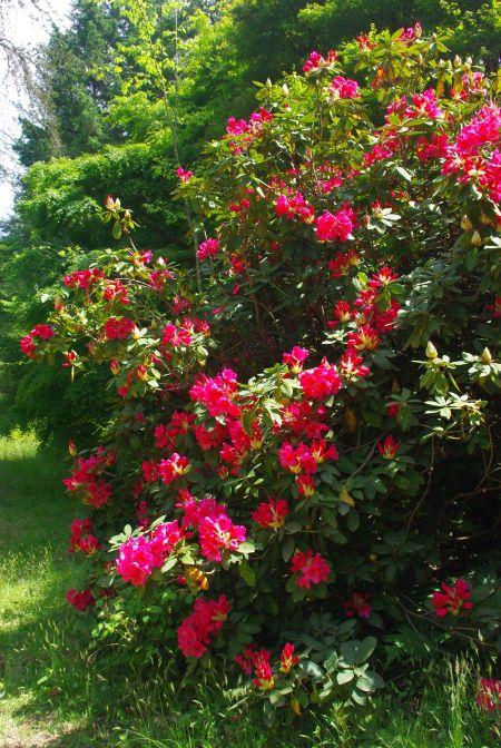 150517-再度公園から六甲森林植物園6