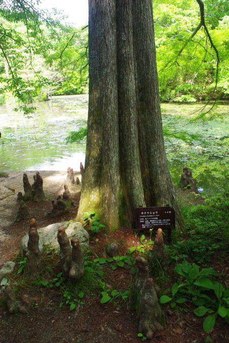 150517-再度公園から六甲森林植物園7