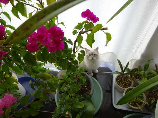 20150115 仔猫ルーム