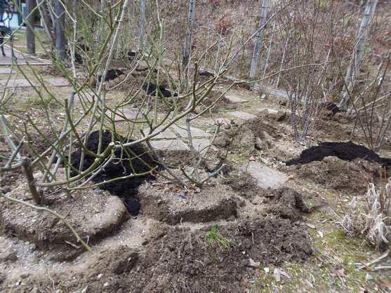20150126 寒肥の施肥作業