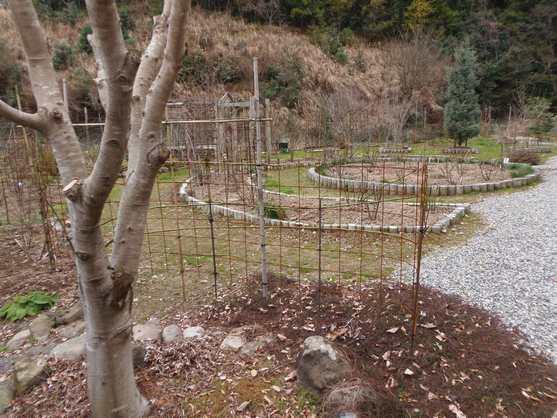 20150204 ガーデン①