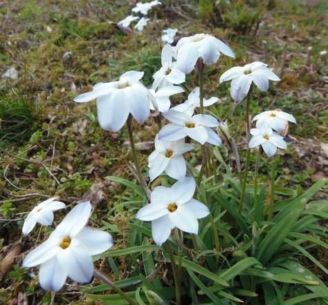 20150321 花ニラ