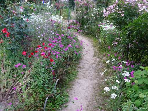 20150526 花の道
