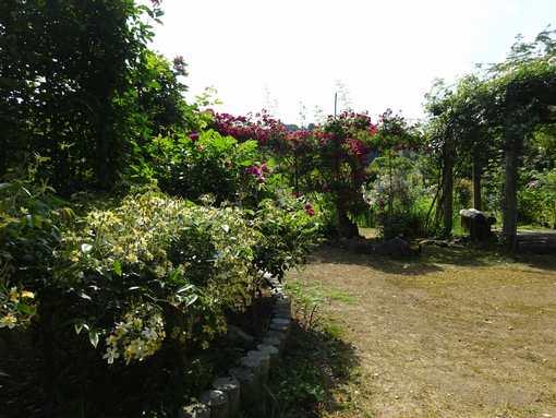 20150530 ガーデン