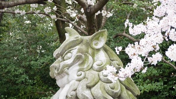 狛犬と桜2