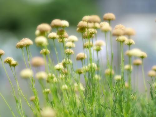 ドーム型のお花2