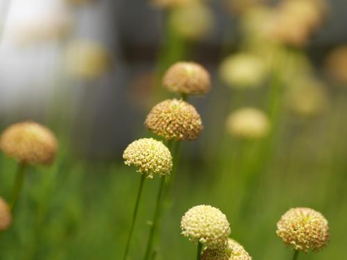 ドーム型のお花3