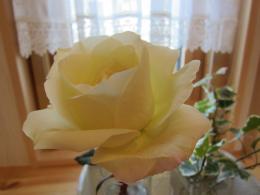 rosewcristmas