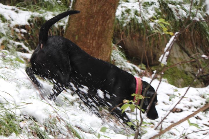 1月雪11