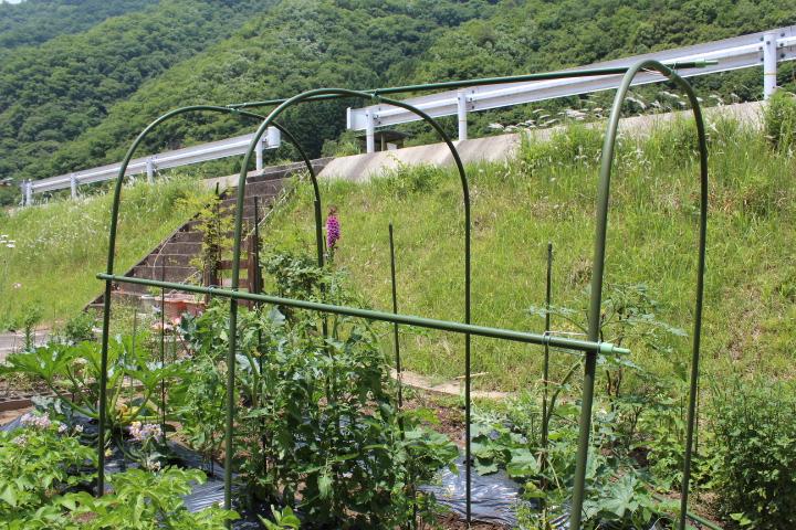 トマト屋根1