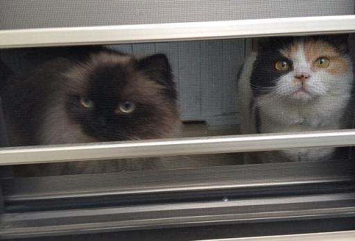ごまかしの窓2015