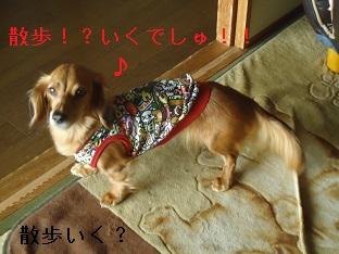 DSC06846.jpg