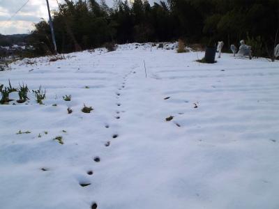 1.4畑は雪に覆われ