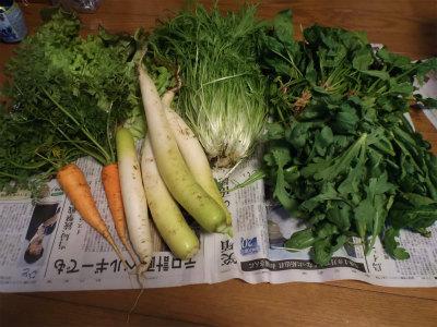 1.18収穫