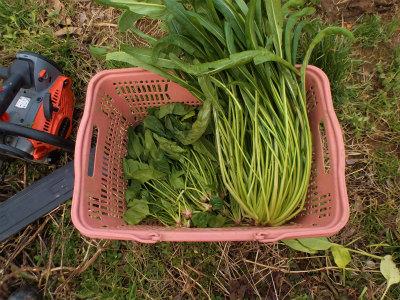 1.25収穫