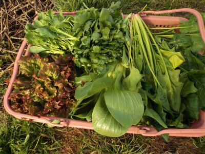 2.7収穫した野菜