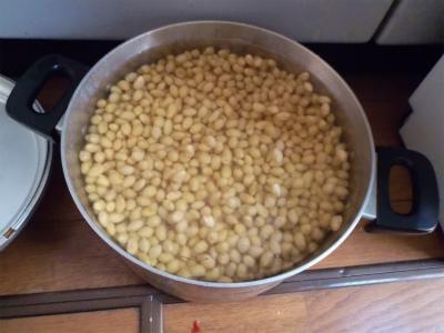 2.10大豆の水浸し