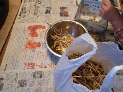 3.29土筆の袴取り