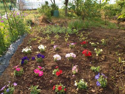 5.18荒地に植えられた花