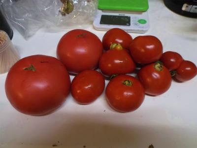 6.11貰ったトマト