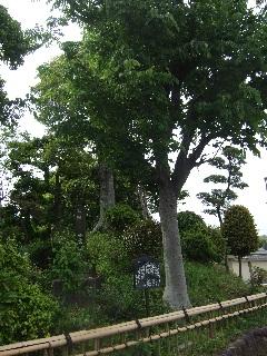 玉井寺の一里塚_H22.05.22撮影
