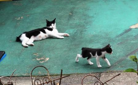 民家の猫_H27.06.06撮影